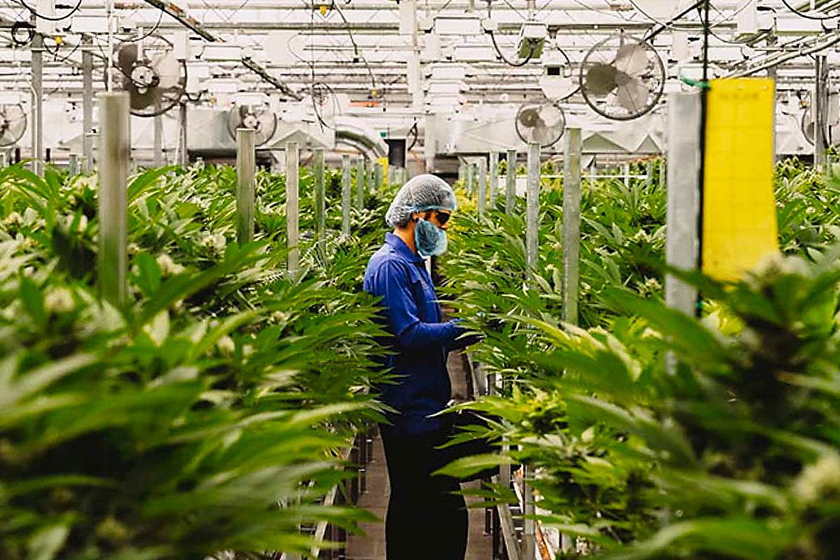 Supreme Cannabis delays product rollout amid COVID-19 pandemic