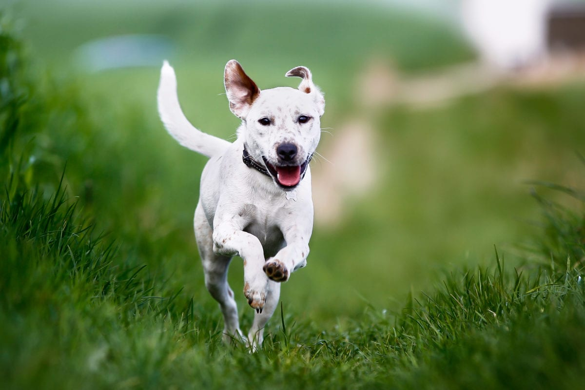 Giving dogs daily CBD improves arthritis symptoms: study