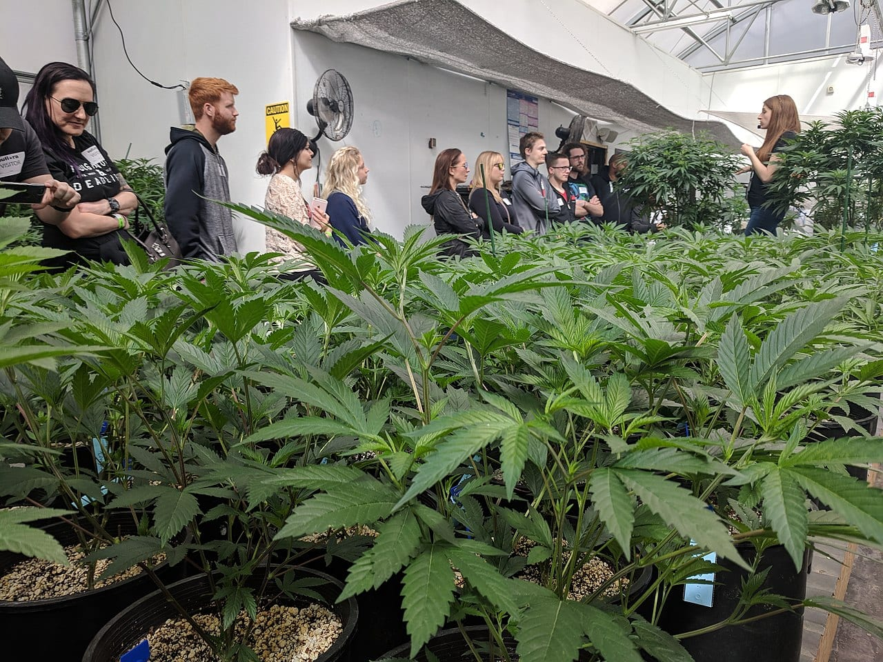 marketing restrictions - cannabis tour in Colorado