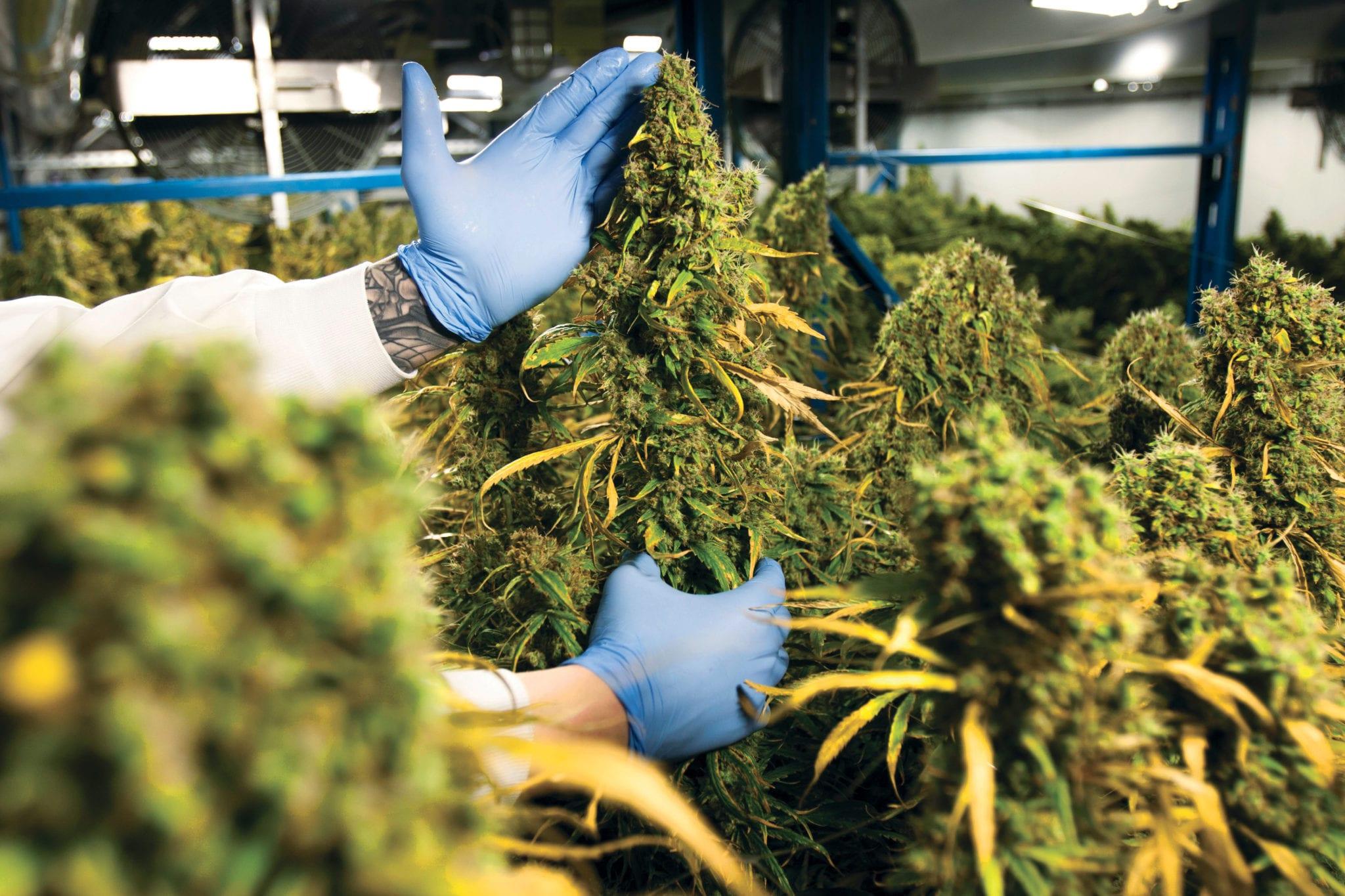Organigram signs 7-year medical cannabis deal with Israeli firm