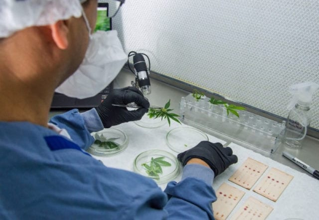 Ikänik Farms to aid Covid-19 research with first import of pharmaceutical cannabis to Mexico