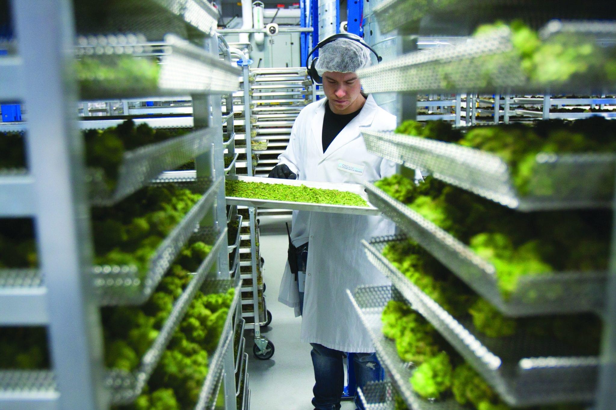 Organigram lays off 220 workers, warns of declining weed sales