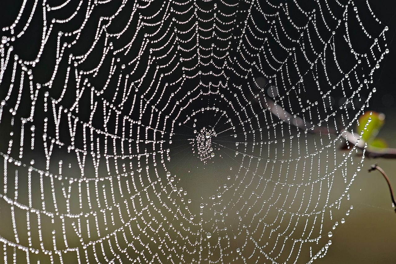 Charlotte's Web continues B2B decrease dulled by e-commerce gains
