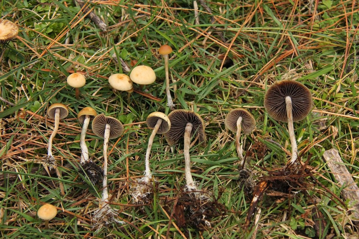 Could microdosing psychedelics help treat schizophrenia?