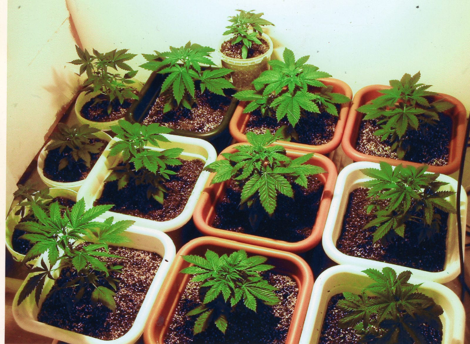 Fighting for the right to grow cannabis in your own backyard