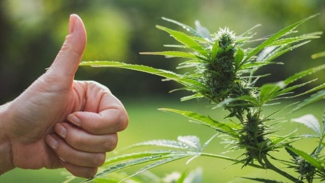 ManifestSeven goes public to continue pursuit of becoming the 'Amazon of Cannabis'