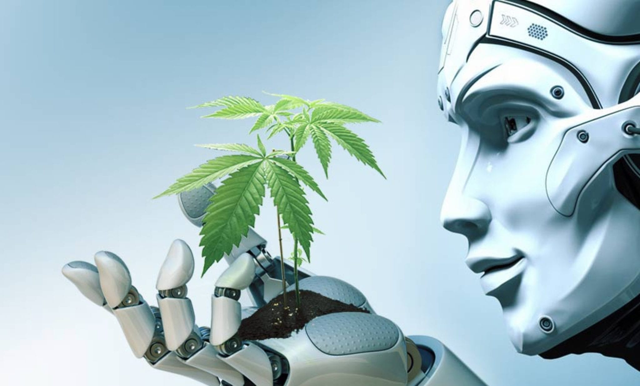 Ottawa pot shop chain unveils first robot budtenders