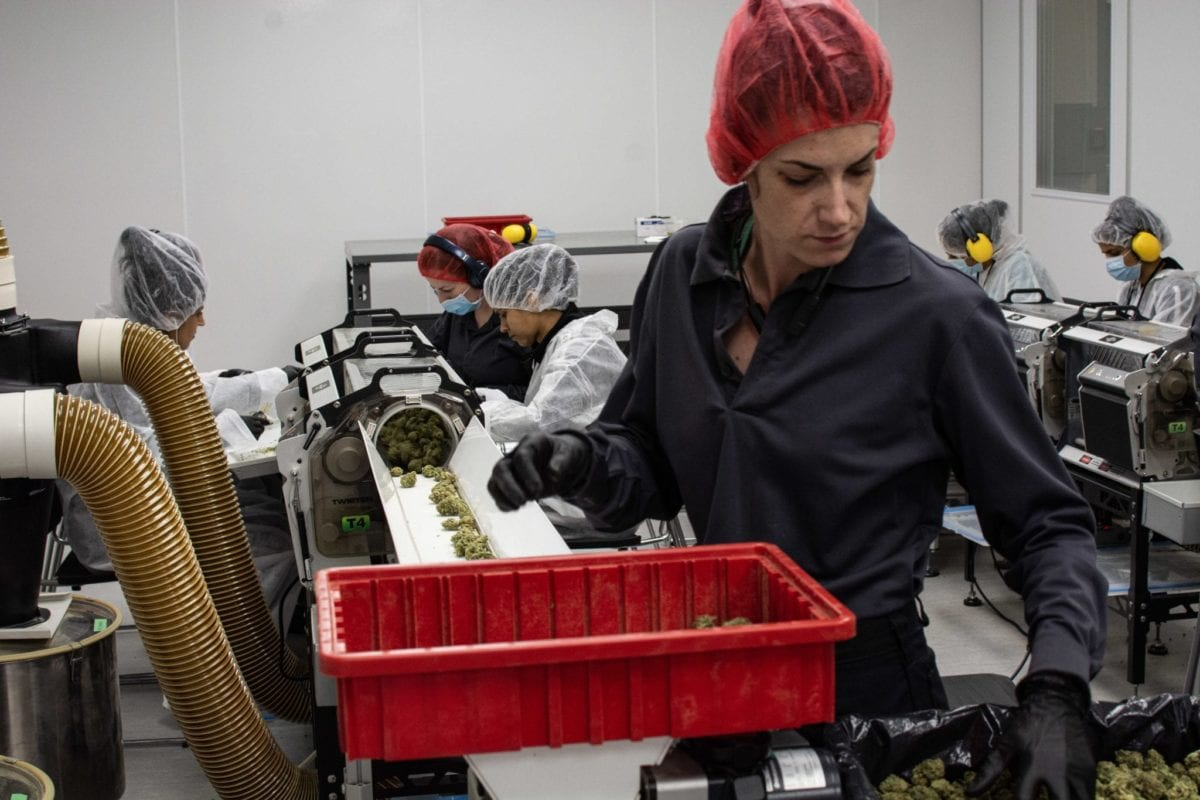 Opinion: If Canada is serious about job creation, it need only plant a cannabis seed