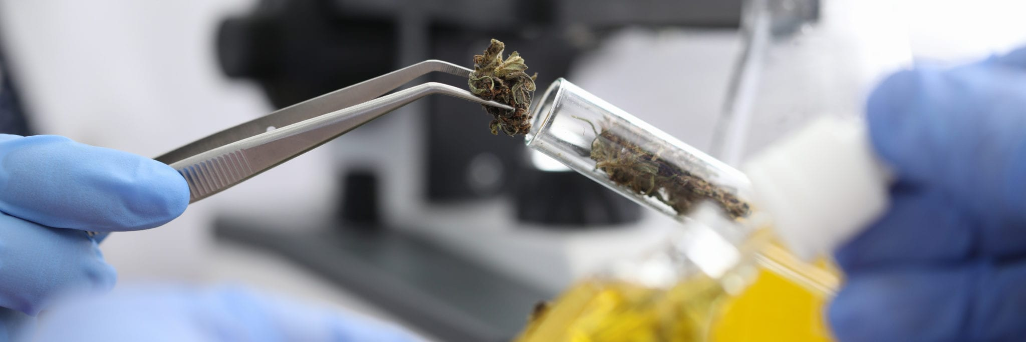 Health Canada requests public feedback on amending various strict pot rules