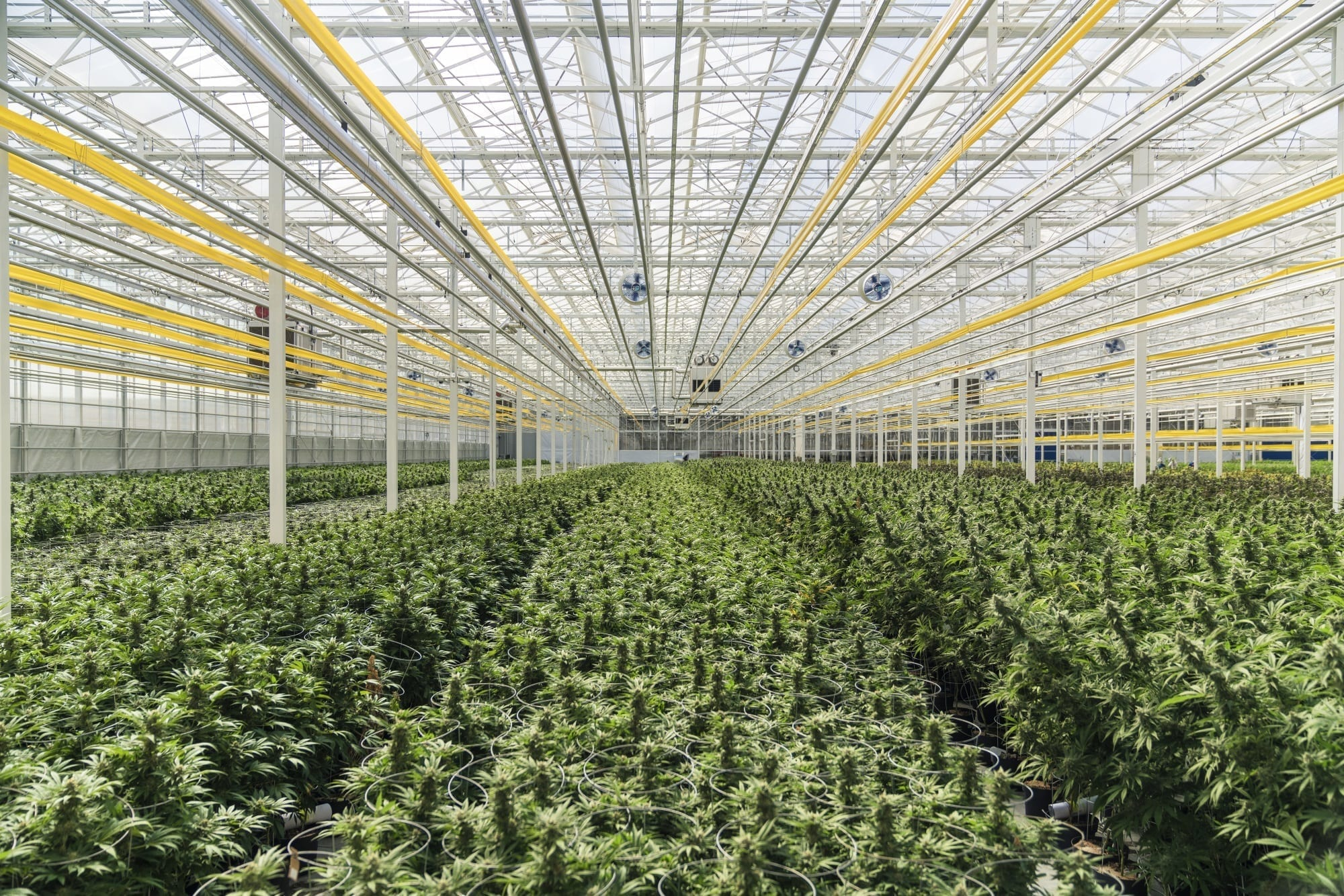 Aphria stock hits 2-year high on record Q2 sales