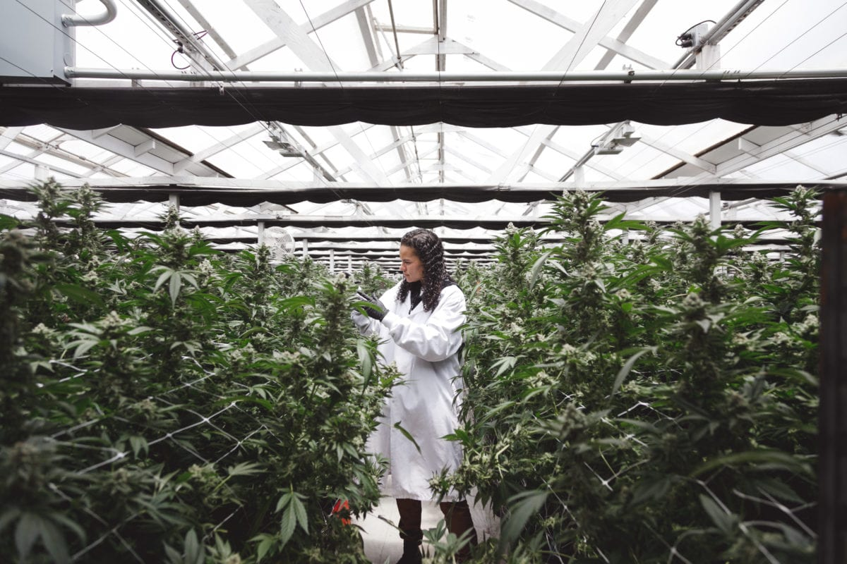 Neglecting legacy cannabis operators is costing California billions a year
