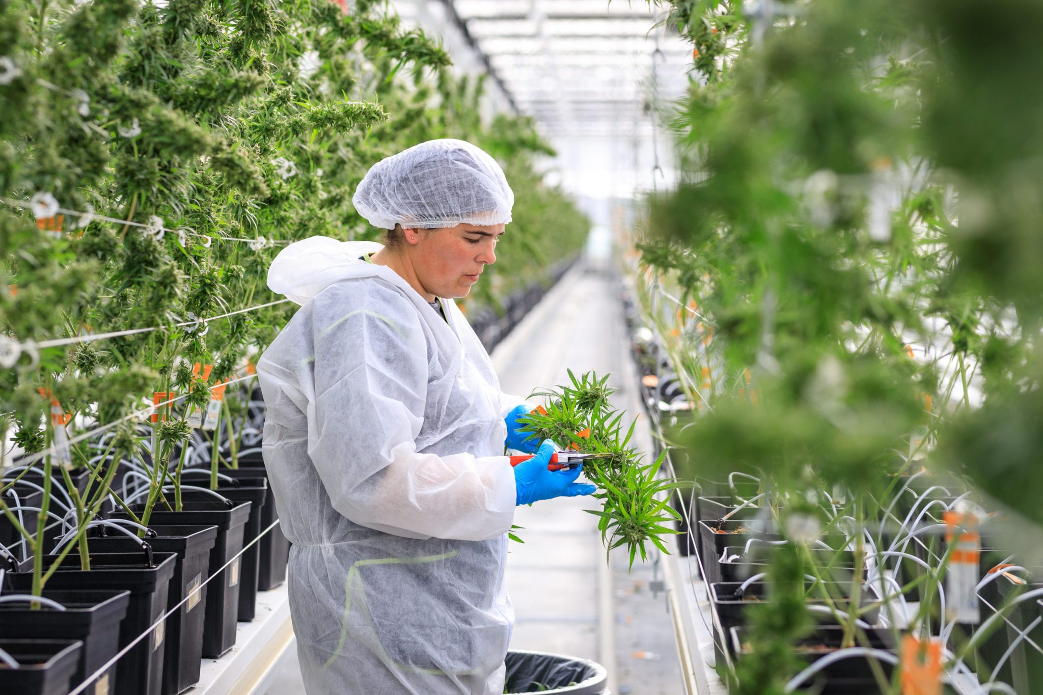 Tilray to supply medical pot in France; Aphria expands brand in Germany