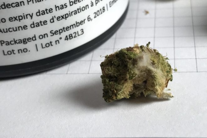 Slow provincial pot distribution continues to create issues like mould, producers say