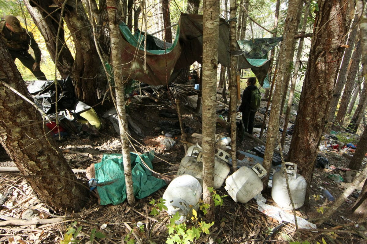 During Covid, California's toxic trespass grows have returned to pre-legalization levels