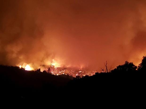 During Covid, California's toxic trespass grows have returned to pre-legalization levels - Dolan fire