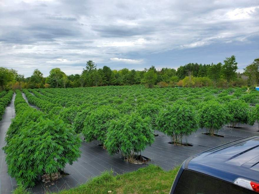 Canada's personal medical pot growers face strict new rules