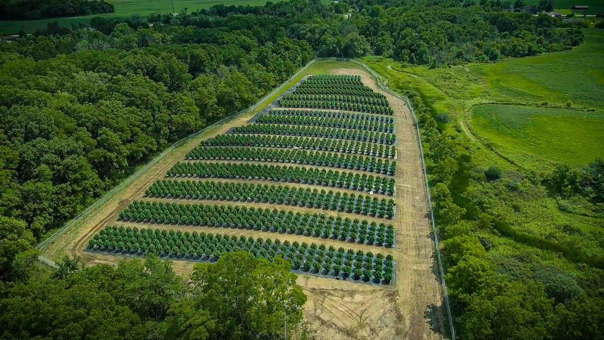 Thrive-cannabis-farm