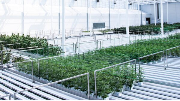 Denmark extends trial for cannabis patients, makes production permanent