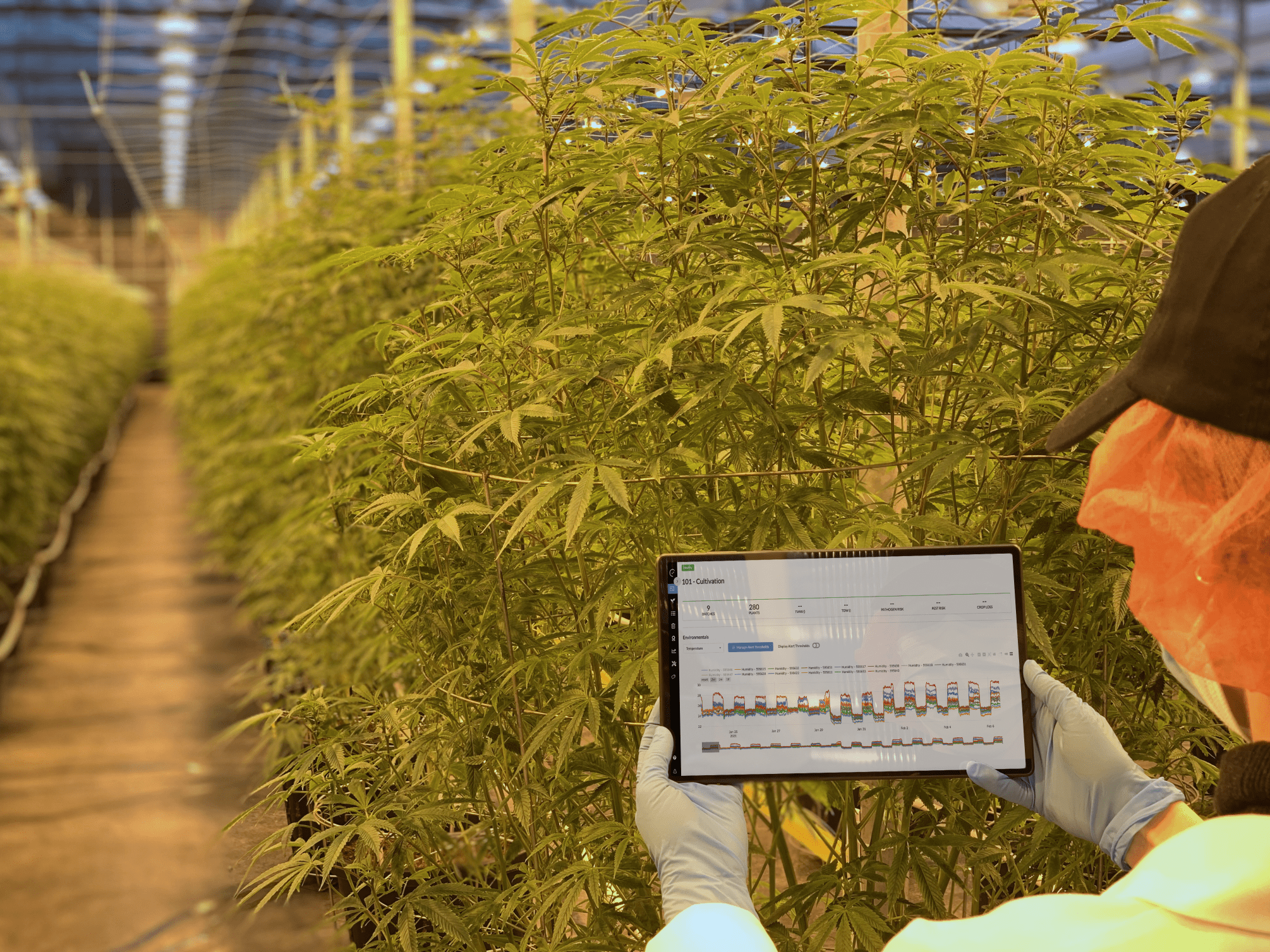 How one software firm is helping the Canadian cannabis industry save trees - Elevated Signals in use at Tantalus Labs