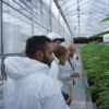 How one software firm is helping the Canadian cannabis industry save trees - Tantalus Amar, Dan, Benn