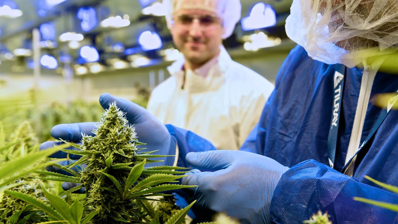 Writedowns and growing pains ahead for Tilray 2.0, analyst says