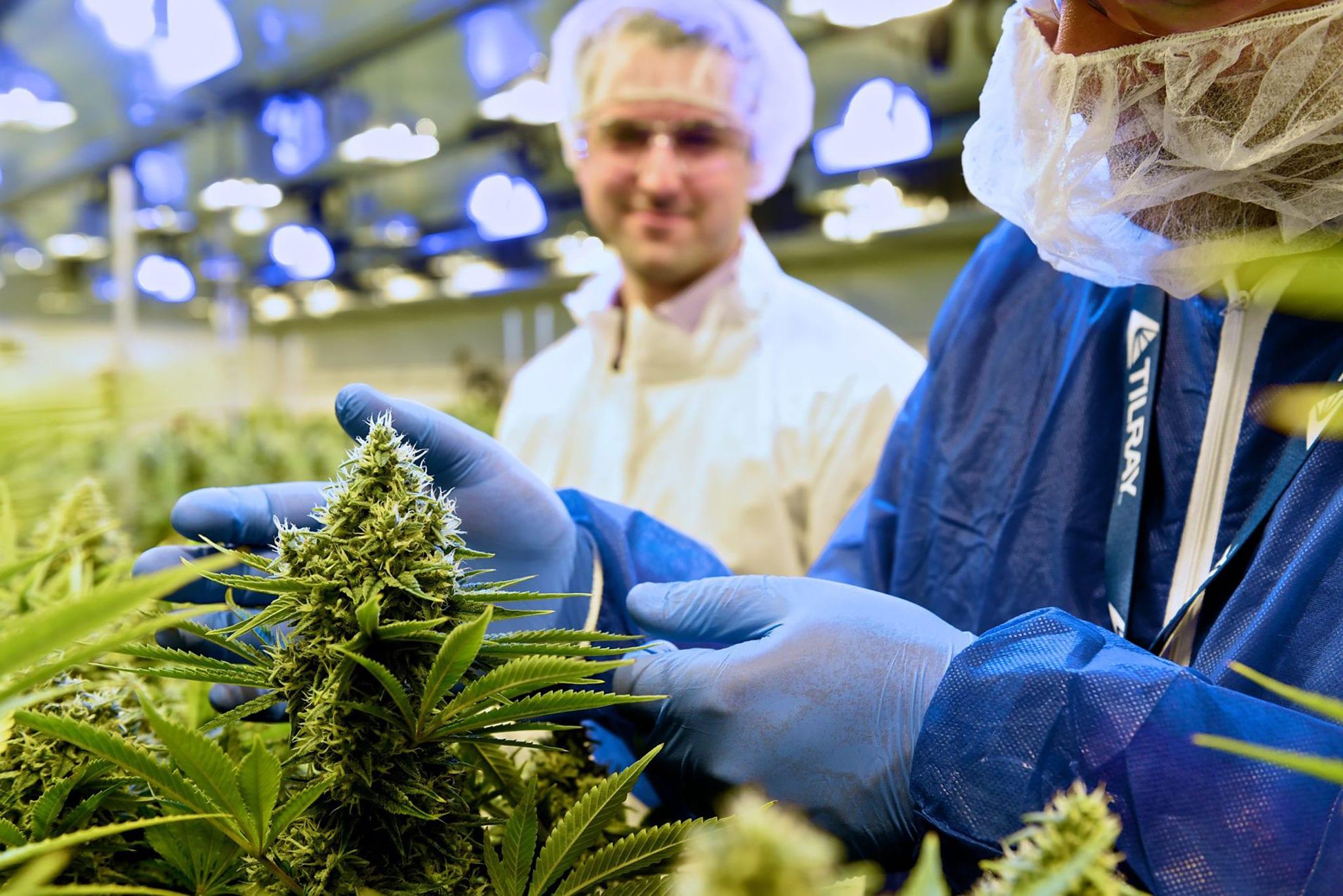 Tilray-Aphria deal closes, creating Canadian pot market leader