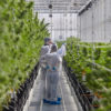 Tilray 1.0 quietly discloses first-quarter US$341M loss