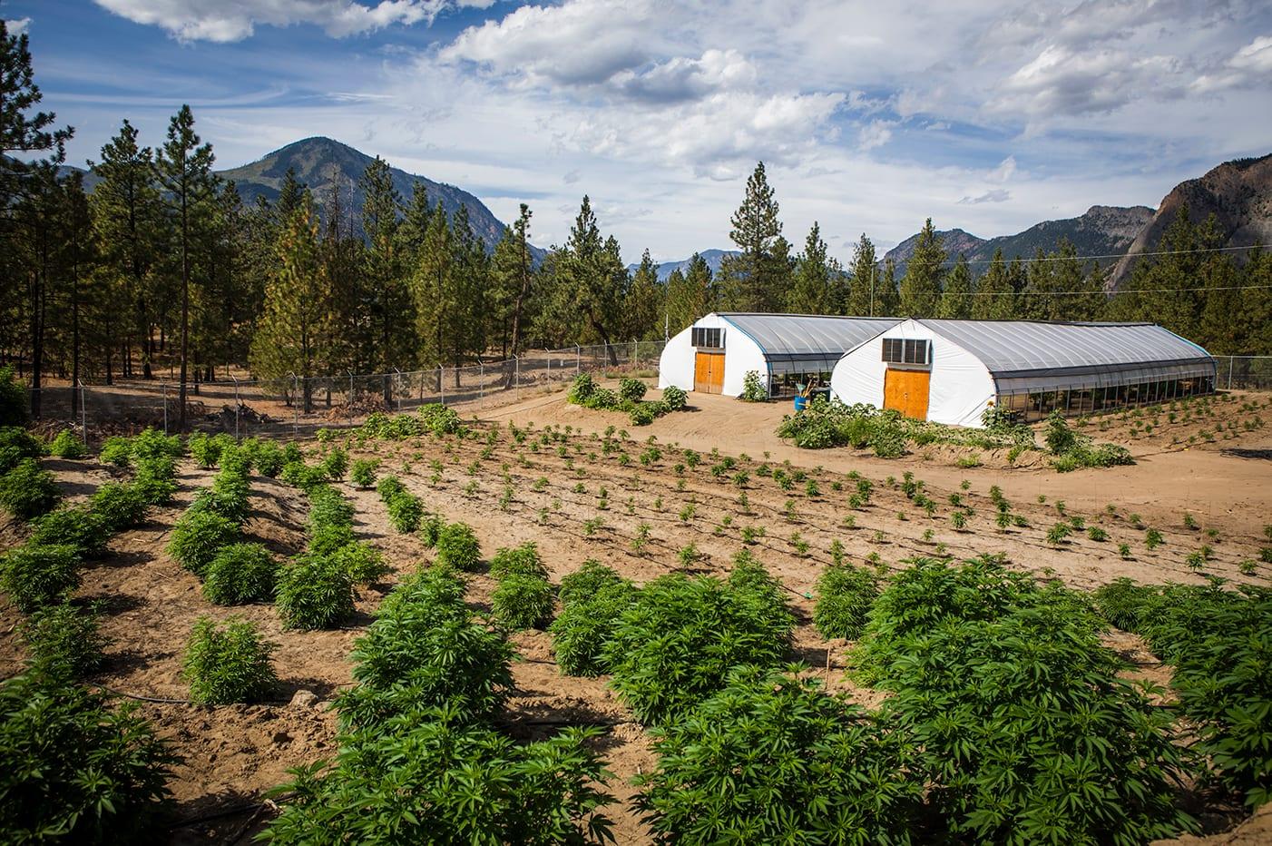BC Heat wave Earthwolf Farms