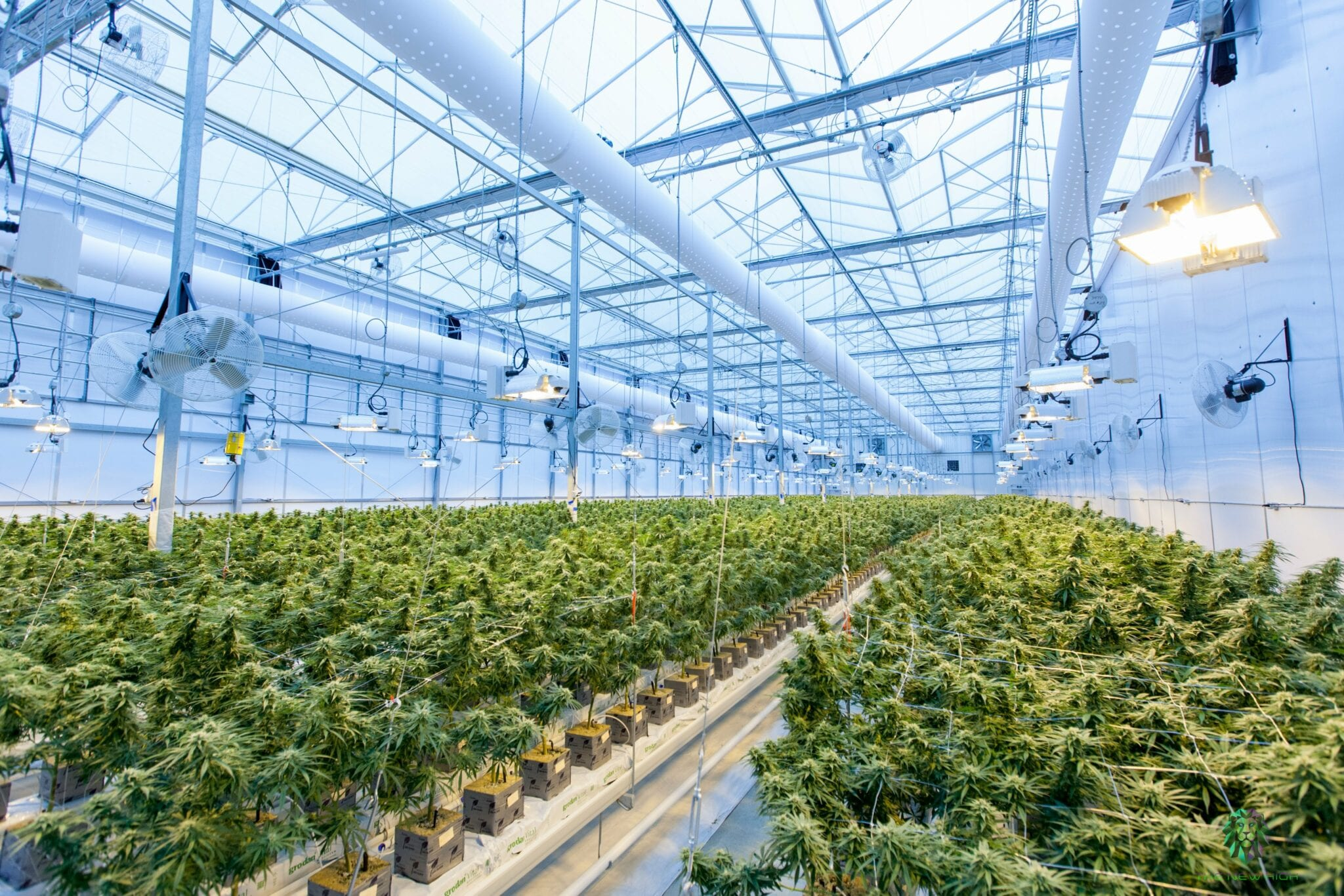 Greece's weed law update good for business but leaves domestic patients in limbo - Hellenic Dynamics
