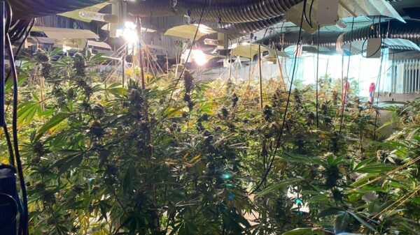 Three men jailed after UK agency finds 1,500 weed plants in abandoned nightclub