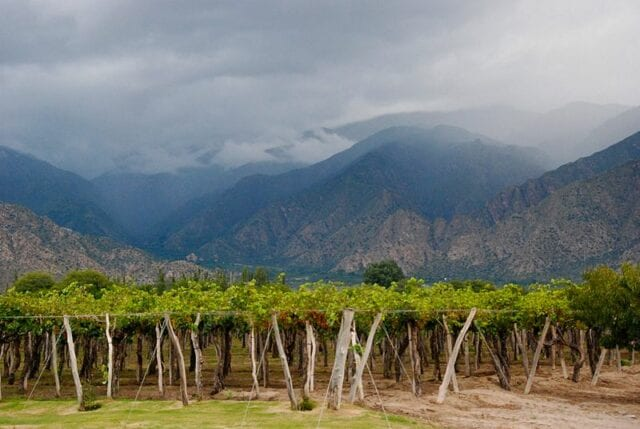 Winery in Cafayate, Argentina