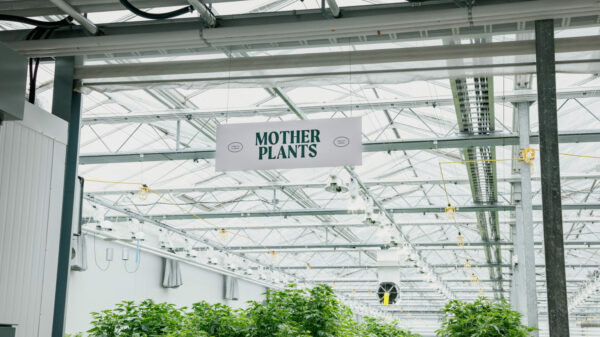 BC cannabis industry leaders create first advocacy coalition for growers
