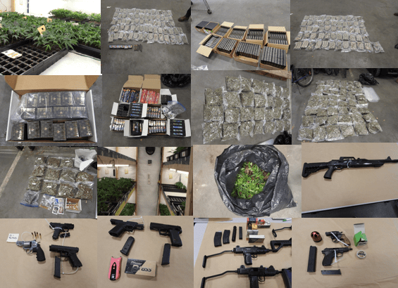 RCMP seize nearly 8,000 clone plants, 5 guns from illicit operation in Langley