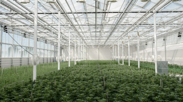 Aurora delivers first shipment for French cannabis pilot program
