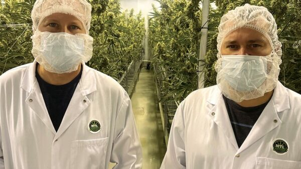 MTL Cannabis co-founders Rich and Mitch Clement standing in front of cannabis plants
