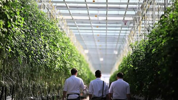 Pure Sunfarms posts strong growth, eyes US expansion