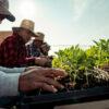 Hemp farmers with Colorado-based Charlotte's Web