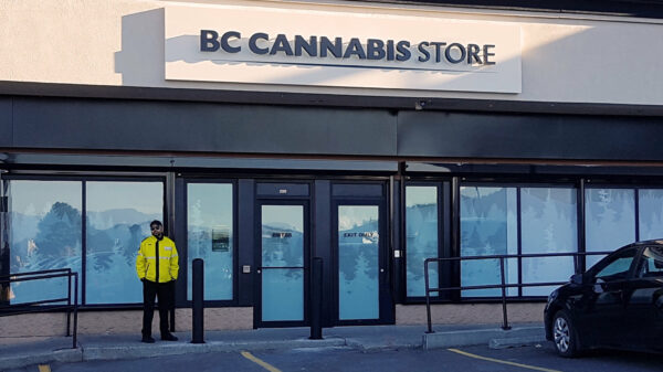 Annual cannabis sales up 141% in BC