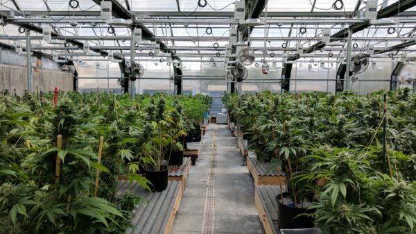 California publishes proposed emergency cannabis regulations