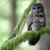 Trespass grows threaten wildlife in western US states, study shows