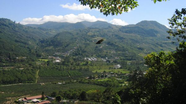 Costa rica legislative assembly votes to legalize cannabis on first discussion